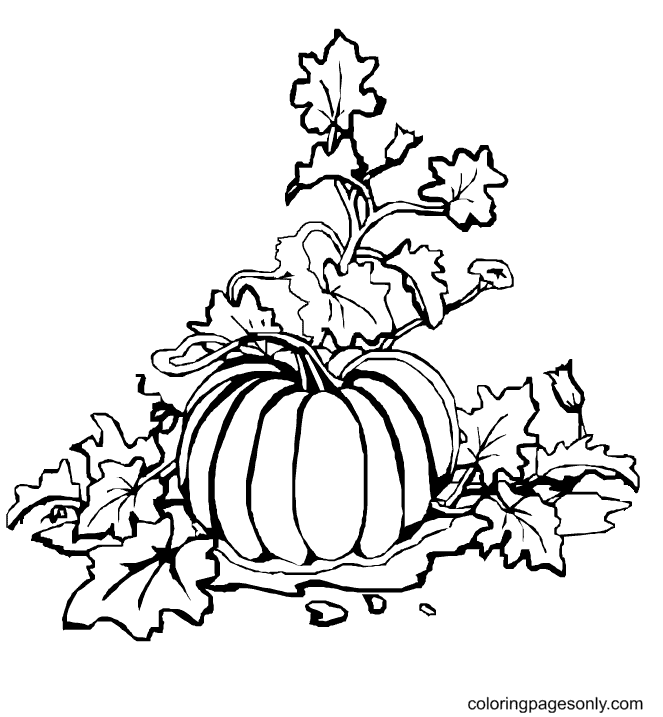 Pumpkin with Leaves Free Coloring Page