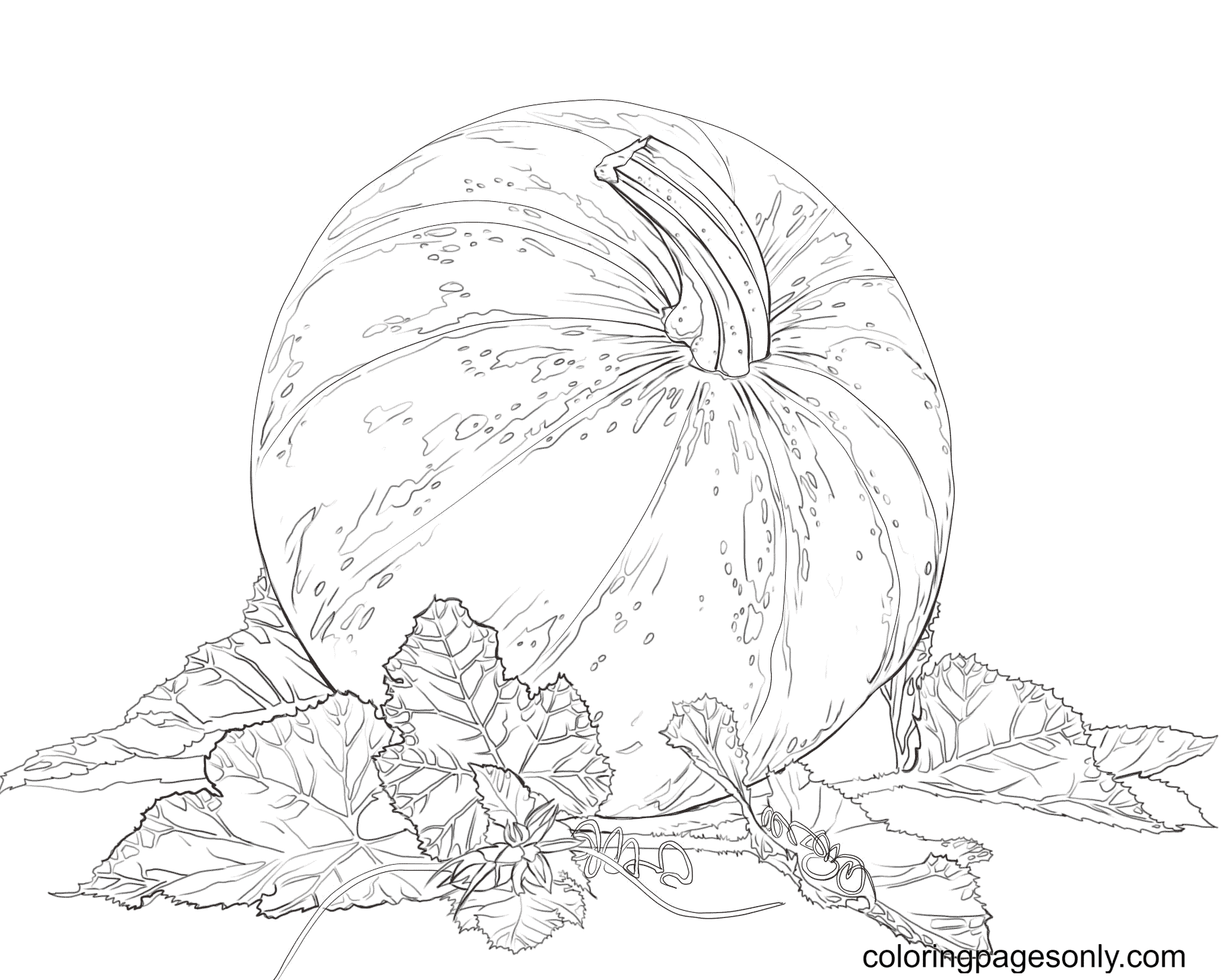 Pumpkin with Leaves Printable Coloring Page