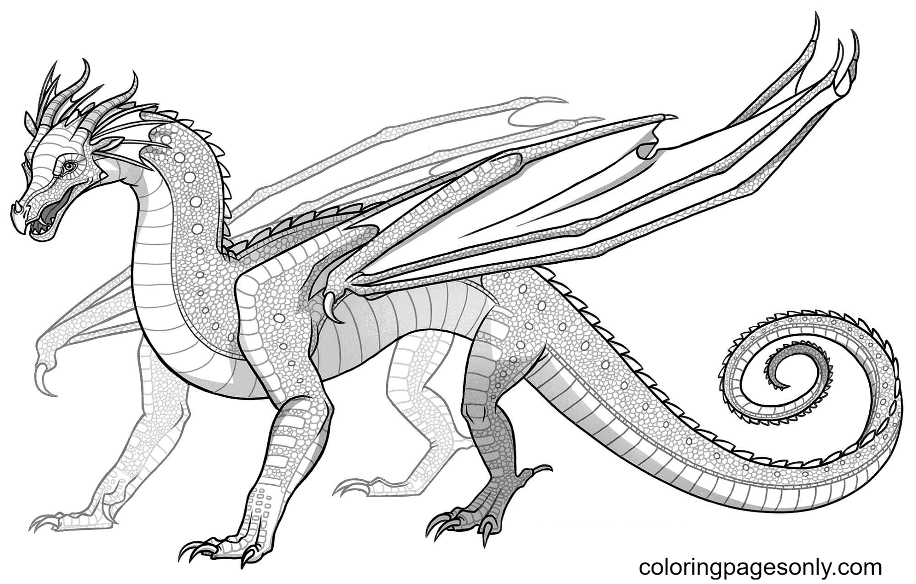 Rainwing Dragon Coloring Page