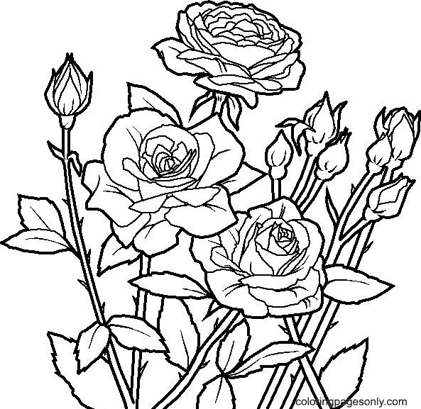 Rose Garden Coloring Page