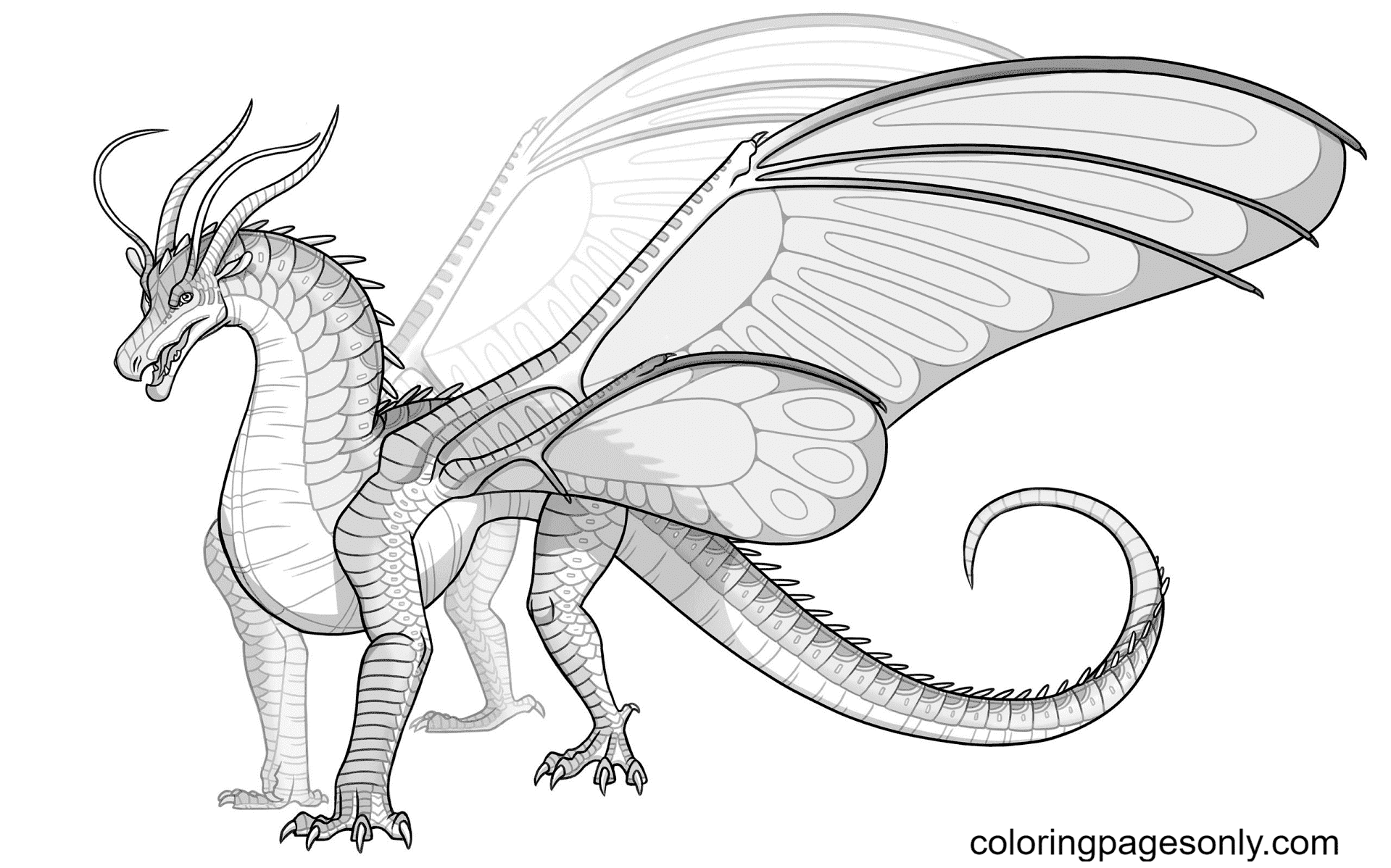 Silkwing Dragon from Wings of Fire Coloring Page