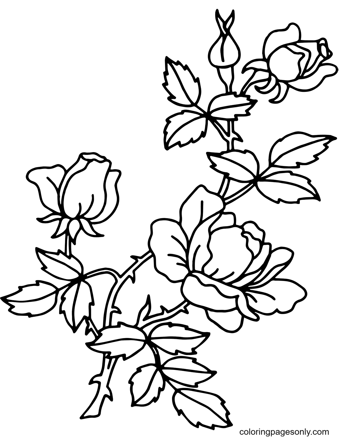 Simple Rose Branch Coloring Page