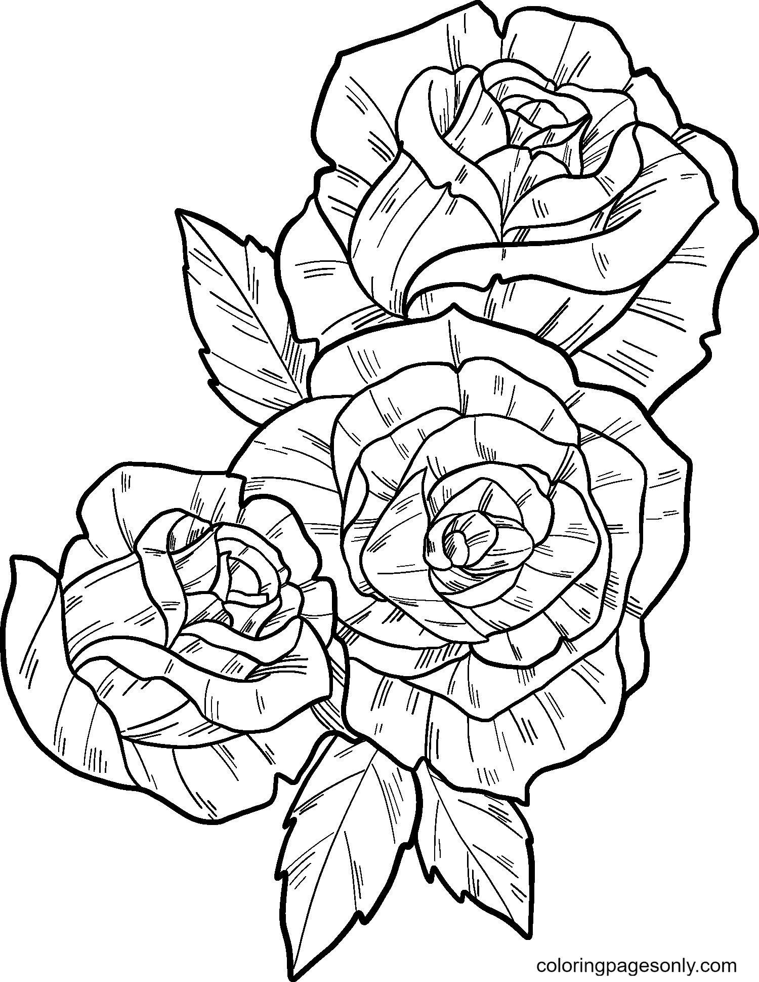Three Beautiful Roses Coloring Page