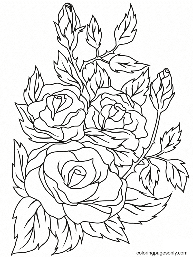 Three Big Roses with Leaves Coloring Page