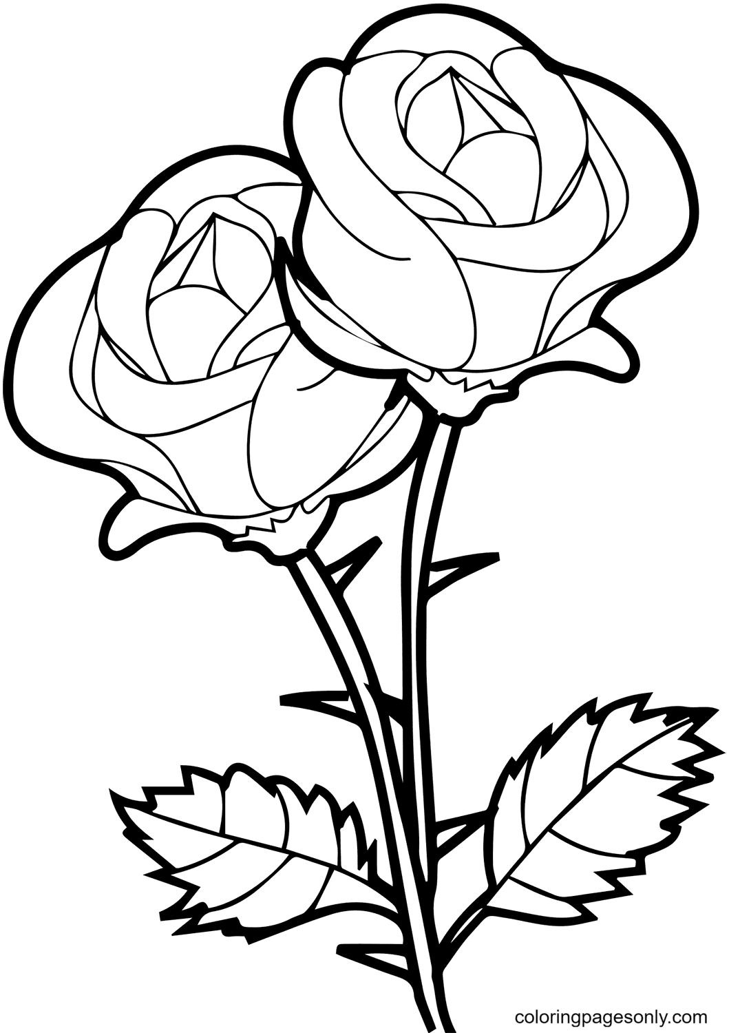 Two Simple Roses With Thorns Coloring Page