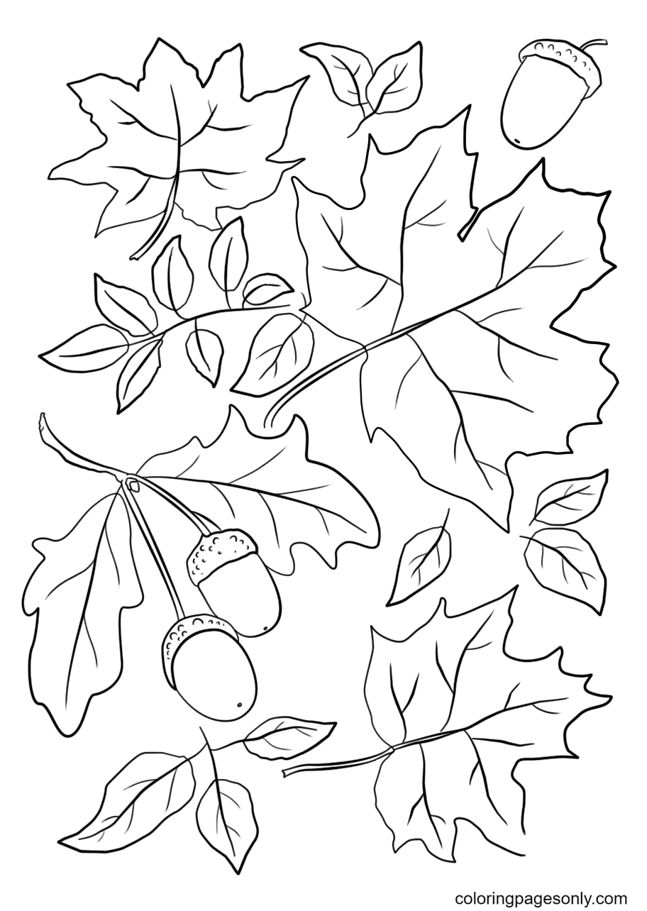 Autumn Leaves and Acorns Coloring Page