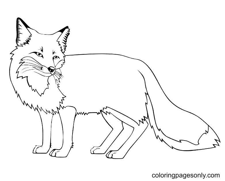Free Printable Fox Coloring Page