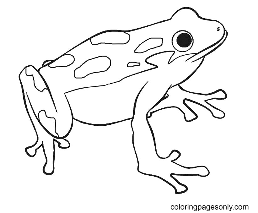 Free Printable Frog Coloring Page