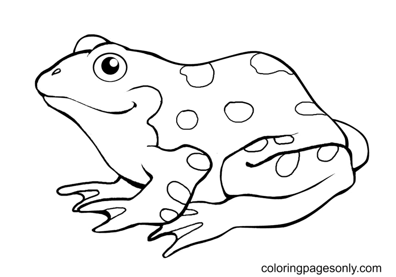 Frog Free Printable Coloring Page