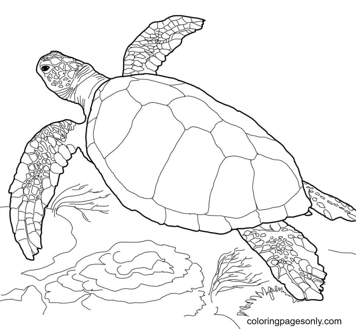 Loggerhead Sea Turtle Coloring Page