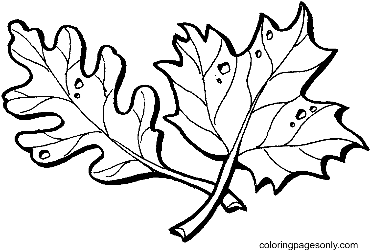 Oak and Maple leaves Coloring Page