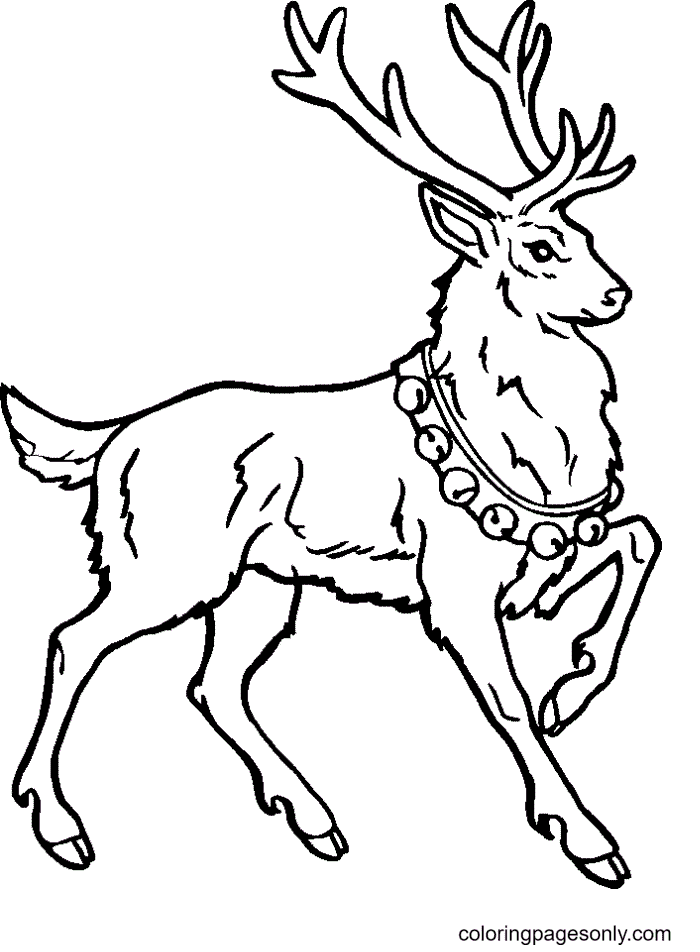 Reindeer Pictures Coloring Page