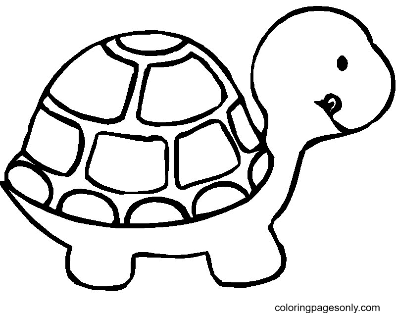 Shy Turtle Coloring Page